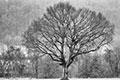 Ich liebe unbelaubte Bäume - in SW
