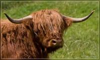 070705-scottish-highland-004.jpg